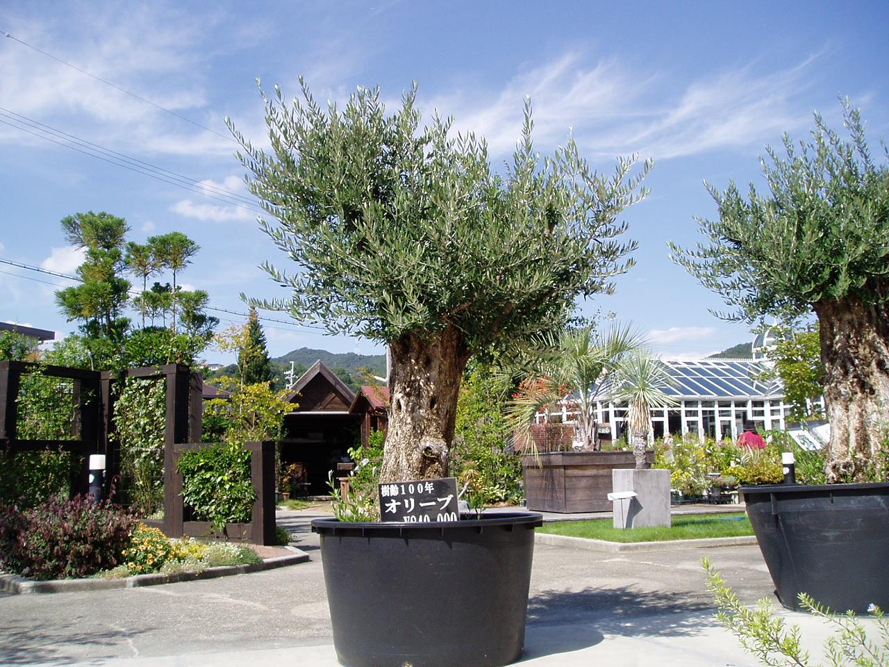 田中哲司が植物好きの理由とは?仲間由紀恵に「オリーブの木を買いたい!」